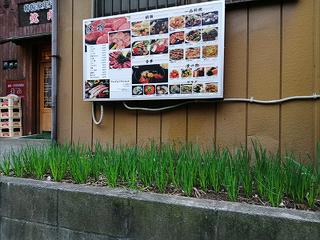 ネギの栽培-4.jpg